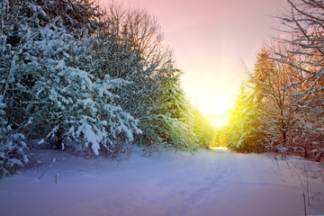 Winter sunset landscape with trees and road.