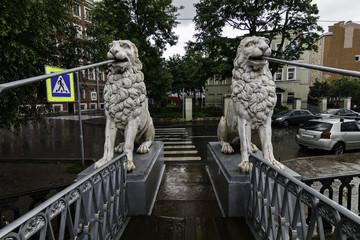 Lions on the bridge in the rain/ Lion Bridge, St. Petersburg, Russia