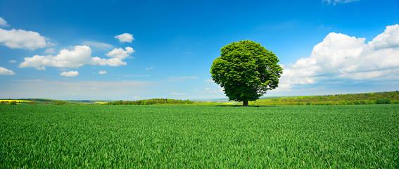 Wall Mural - Einzelner Baum, grünes Feld, blauer Himmel, weiße Wolken, Landschaft mit Kastanie im Frühling