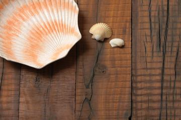 Sea shells over wooden plank