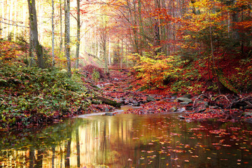 A small pond on the stream in the autumn forest
