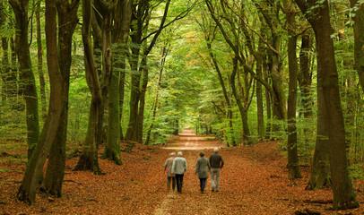 Gruppe Senioren wandert durch Buchenwald im Herbst