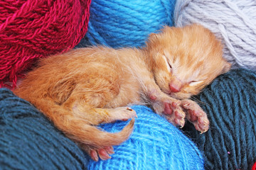 New born baby cat sleeping. Cute beautiful little few days old orange cream color kitten. Newborn abandoned rescued orange cat kitten.