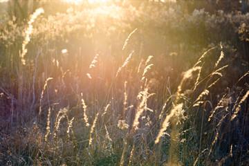 golden meadow grass blowing in warm sunlight