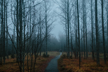 Nordic forest in fog