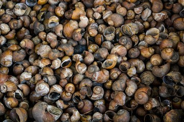 Background and Texture, Many of Empty Snail Shells.