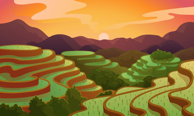 Vector landscape rice Chinese field terrace