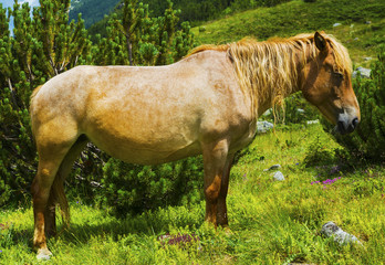 Beautiful landscape with wild horse in the mountain