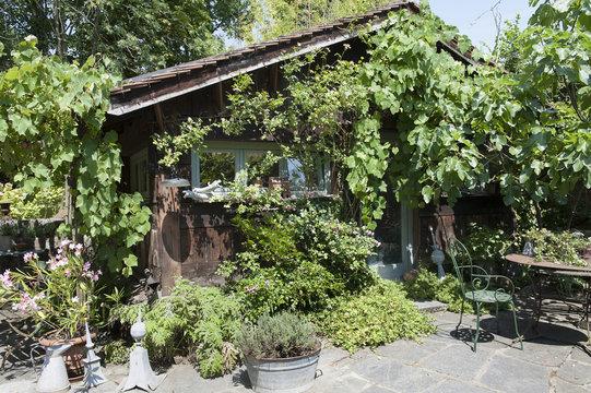 Cabane de jardin en bois recouvert de vigne et de rosiers en été et sa terrasse, table et chaises en fer forgé chiné