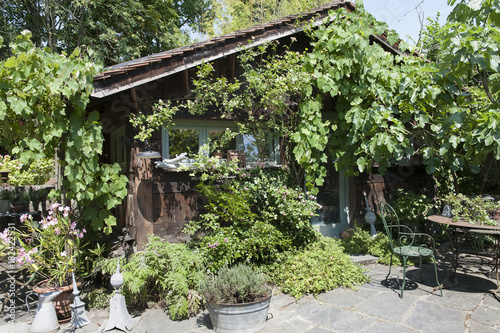 Cabane de jardin en bois recouvert de vigne et de rosiers en ...