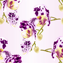 Seamless texture  beautiful  Orchid spotted white and purple stem with flowers and  buds closeup isolated vintage  vector editable illustration hand draw
