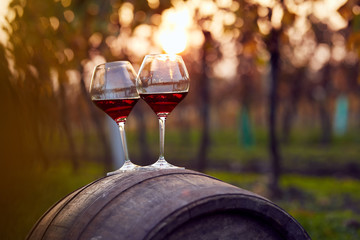 Two glasses of red wine in autumn vineyard