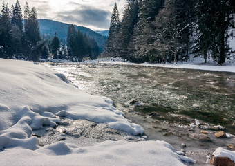 cold flow of forest river in snowy spruce forest. ice and snow on the rocky shore. gorgeous winter scenery in mountainous area on a cloudy day.