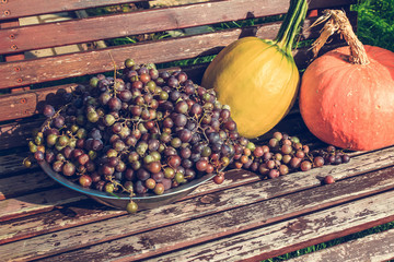 Autumn fruit, grapes and pumpkins close up, instagram style