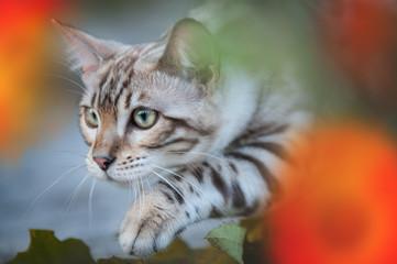 Bengal Cat between Flowers
