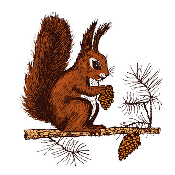 Christmas squirrel and animal with fir-cone in the forest. winter holidays. engraved hand drawn in old sketch and vintage style for postcards. New Year symbol.