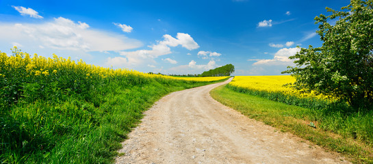 Kulturlandschaft im Frühling, blühendes Rapsfeld, kurviger Feldweg, blauer Himmel