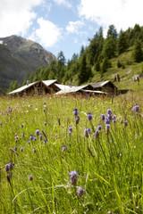 Alpine hut and pasture near Soelden, Tyrol, Austria