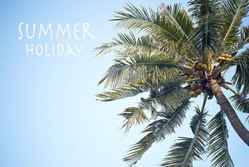 Summer holiday concept coconut palm Tree