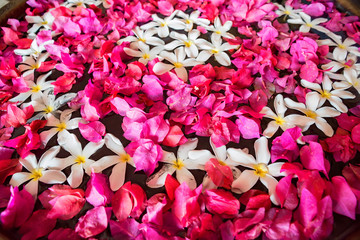 Close up Bougainvillea and plumeria flowers