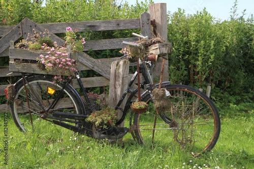 Altes Verrostetes Fahrrad Mit Blumen, Konzept, Garten Dekoration