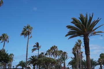 Palmen an einer Promenade vor blauem Himmel