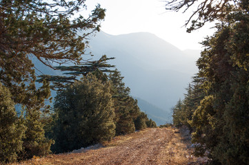 Dirt road in cedrus forest. Way to Elmali, Turkey region. Coniferous tree.
