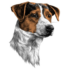 dog sketch vector graphics color picture