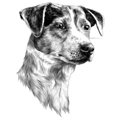 dog sketch vector graphics monochrome black-and-white drawing