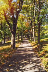 Path in park. Early autumn scenery