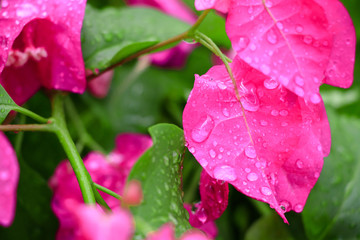 Raindrops on a beauty flower