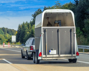 Car with horse trailer on road in Switzerland