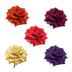 Rose in shades of red, purple and gold. Hand drawn realistic vector illustration.