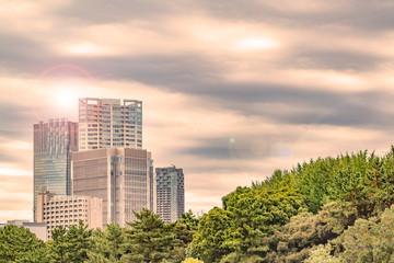 都会のビルと木々