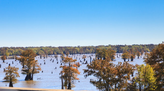trees grow in and around the Atchafalaya River in Mississippi