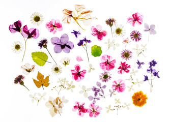 colorful dry flowers