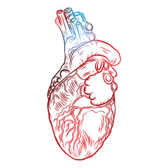 Sketched hand drawn line art decorative human heart in anatomy details. Vintage style beautiful flesh tattoo template isolated on white. T-shirt print design. Vector.