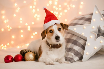 Dog breed Jack Russell Terrier in Santa's cap against a background of blurry lights