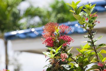 ハワイ 南国の植物