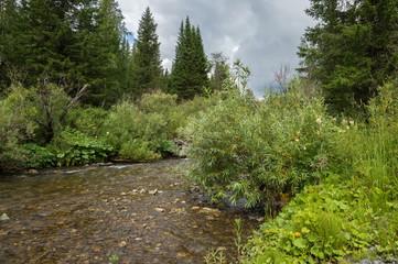 Горная мелкая речка течёт в летней тайге.