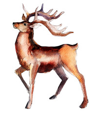 Handdrawn vintage Deer, watercolor Christmas  illustration isolated on white background.