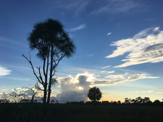 one tall tree in the swamp at sunset
