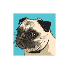 Portrait of a dog of pug breed. Face of a cute pet. Color drawing, vector illustration in engraving style.