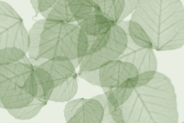 decorative design with some leaves on a colorful background