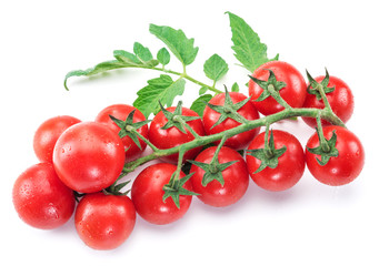 Branch of cherry tomato on the white background.
