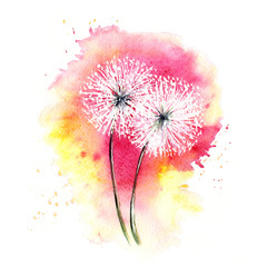 Valentine card -- air dandelions / Watercolor drawing, sketch, two flowers