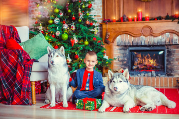 Little boy playing with the dogs Husky in the room on the New Year's tree background Celebrating the New Year, Christmas.