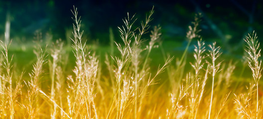 soft focus  grass flower  spring  nature background