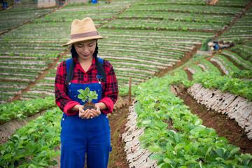 farmer Hand picked strawberry