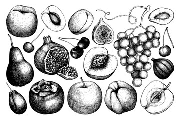 Vintage fruits and berries - fig, apple, pear,  peach, apricot, persimmon, pomegranate, quince, grapes. Hand drawn harvest sketch. Summer or autumn design.